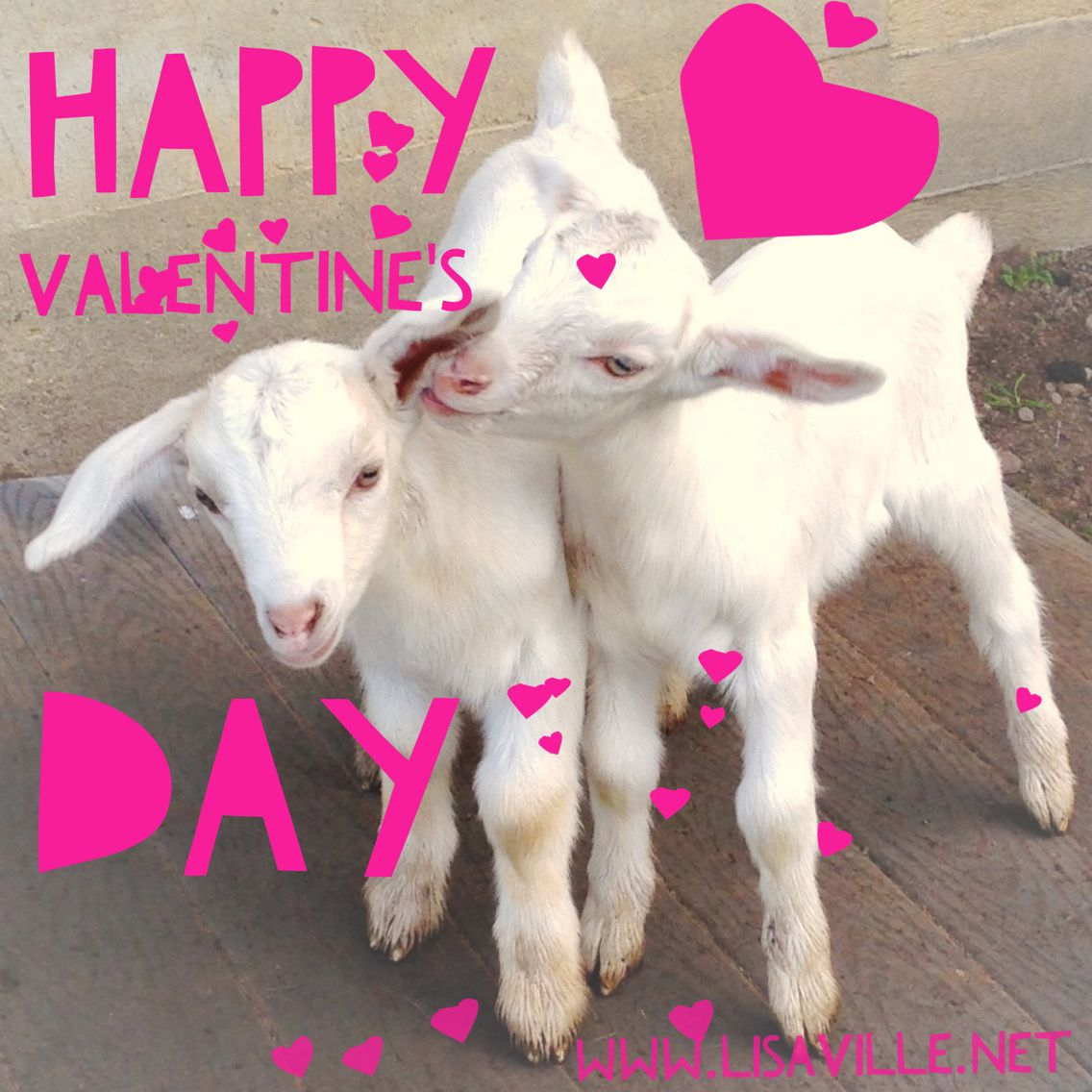 Happy Valentineu0027s Day!!!! Baby Goats And Ranch Life. Heart