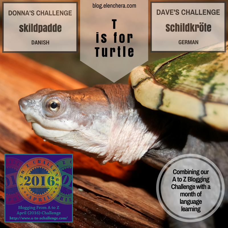A to Z Blogging Challenge: T is for Turtle #atozchallenge