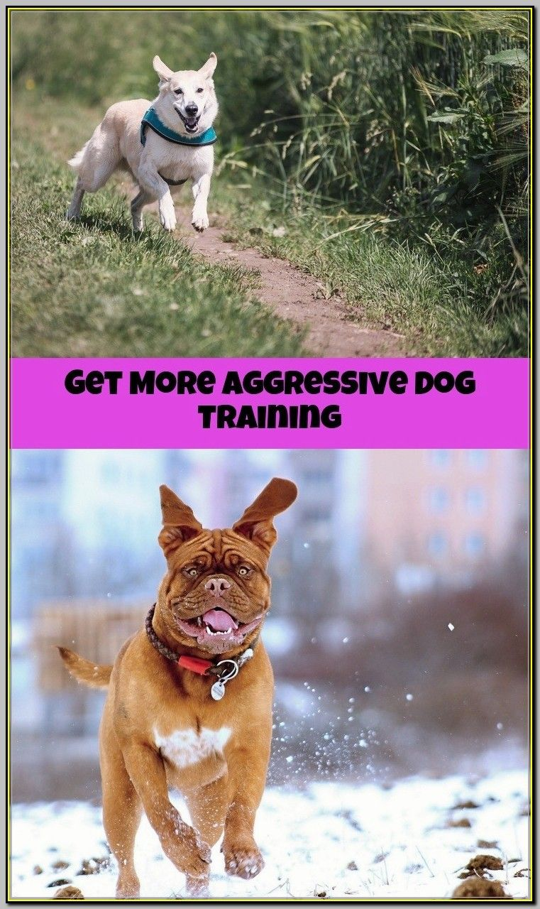 Make Aggressive Training Sessions Fun For Your Dog And You Dog