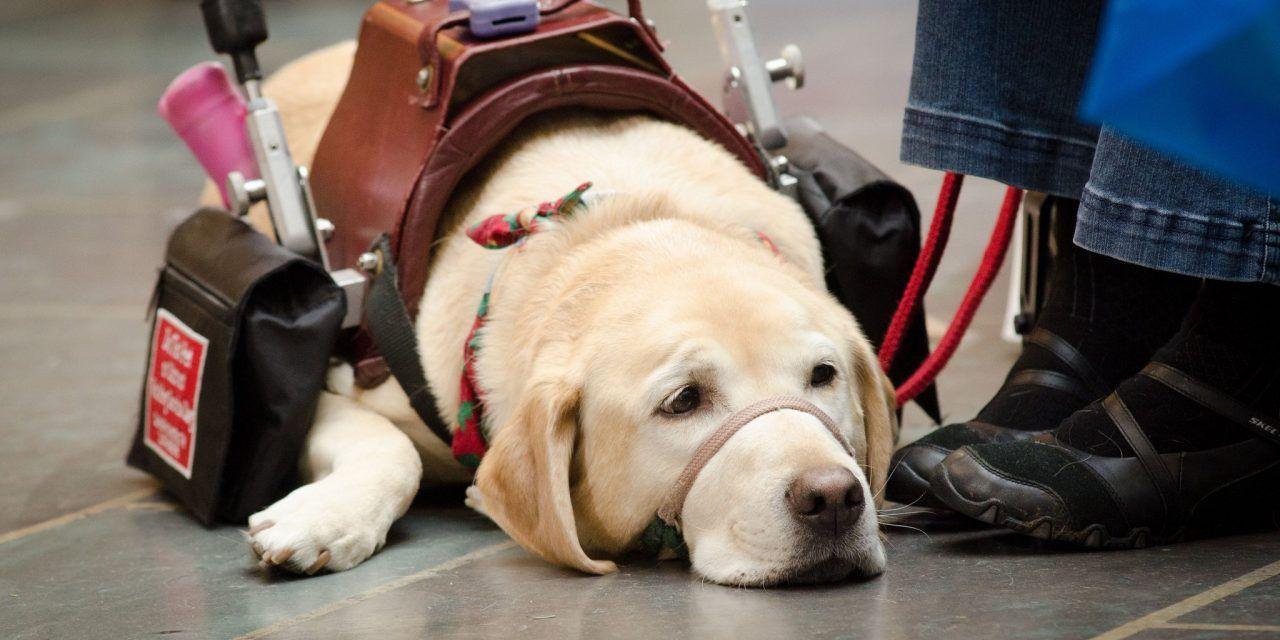 Emotional Support Animal (ESA) Letter Samples Service dogs