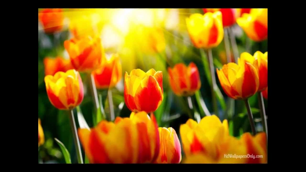 Prettiest Flowers The Isaacs Hd With Lyrics Music Video