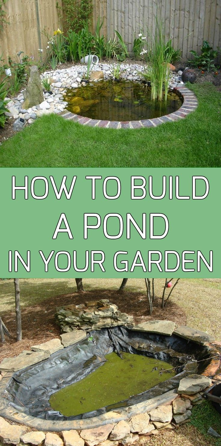 A pond in your garden brings a