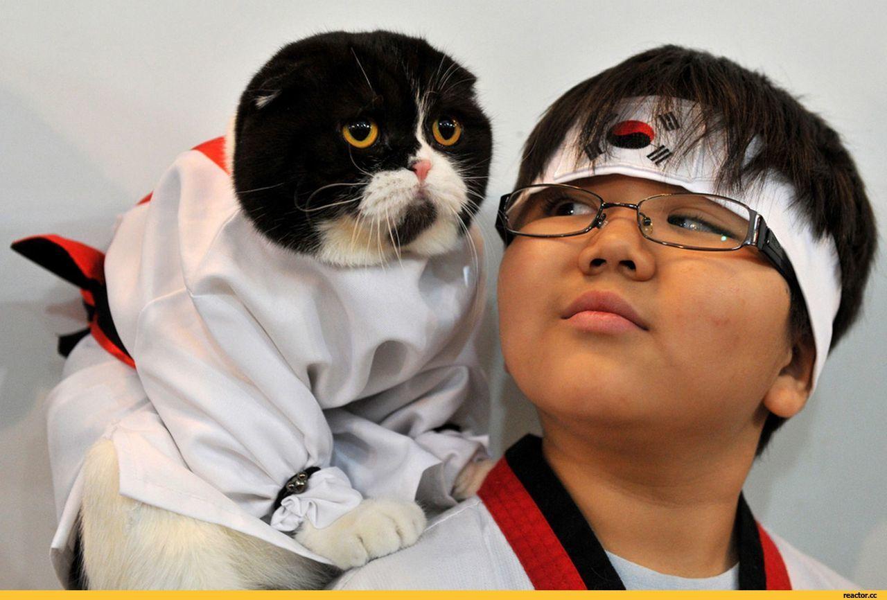 Смешное про корейцев картинки фото костюм звездочки