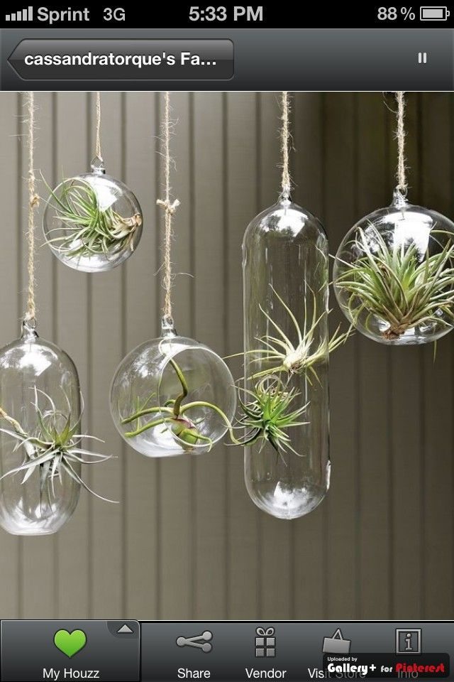 Hanging plant holders bathroom ideas pinterest for Air plant holder ideas