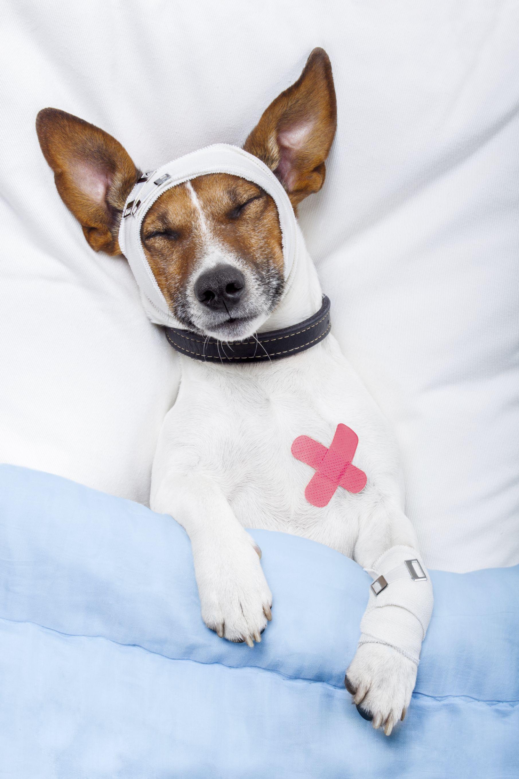 Pin On Dog And Cat Orthopedic Surgery Miramar Florida