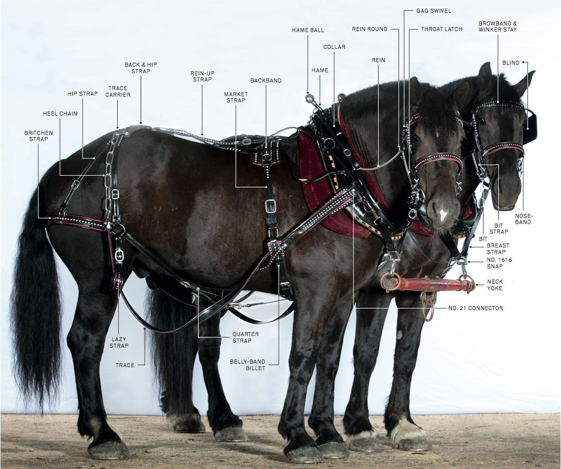 a74a7cf44ce72525d3ddbe297edbcab8 the draft horse gear and tools you need all about draft horses