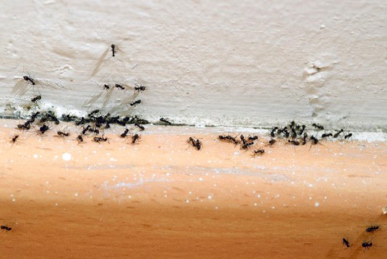 9 astuces naturelles contre l 39 invasion de fourmis astuce. Black Bedroom Furniture Sets. Home Design Ideas