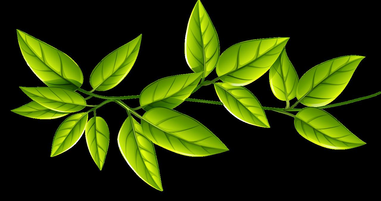 рисунок зеленые листья на белом фоне настоящее
