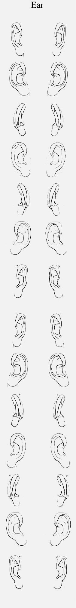 Orejas | Rostros | Pinterest | Dibujo, Anatomía y Dibujar