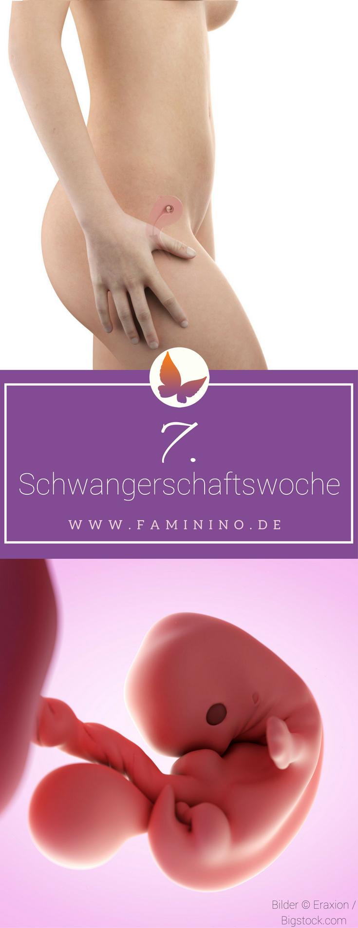 7 Ssw 7 Schwangerschaftswoche Anzeichen Symptome Ultraschall