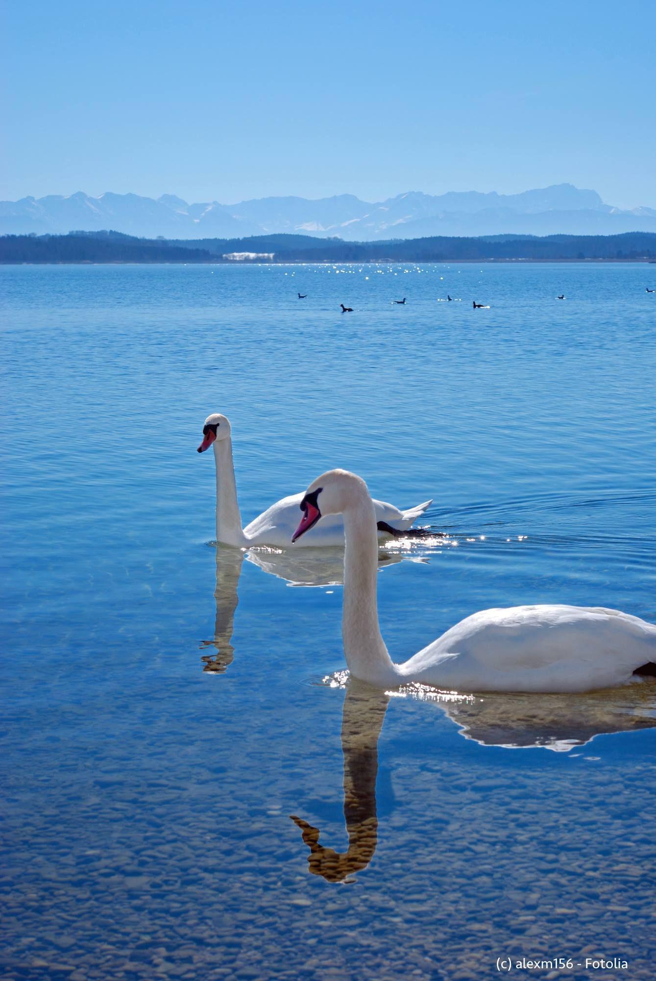 Starnberger See Duitsland