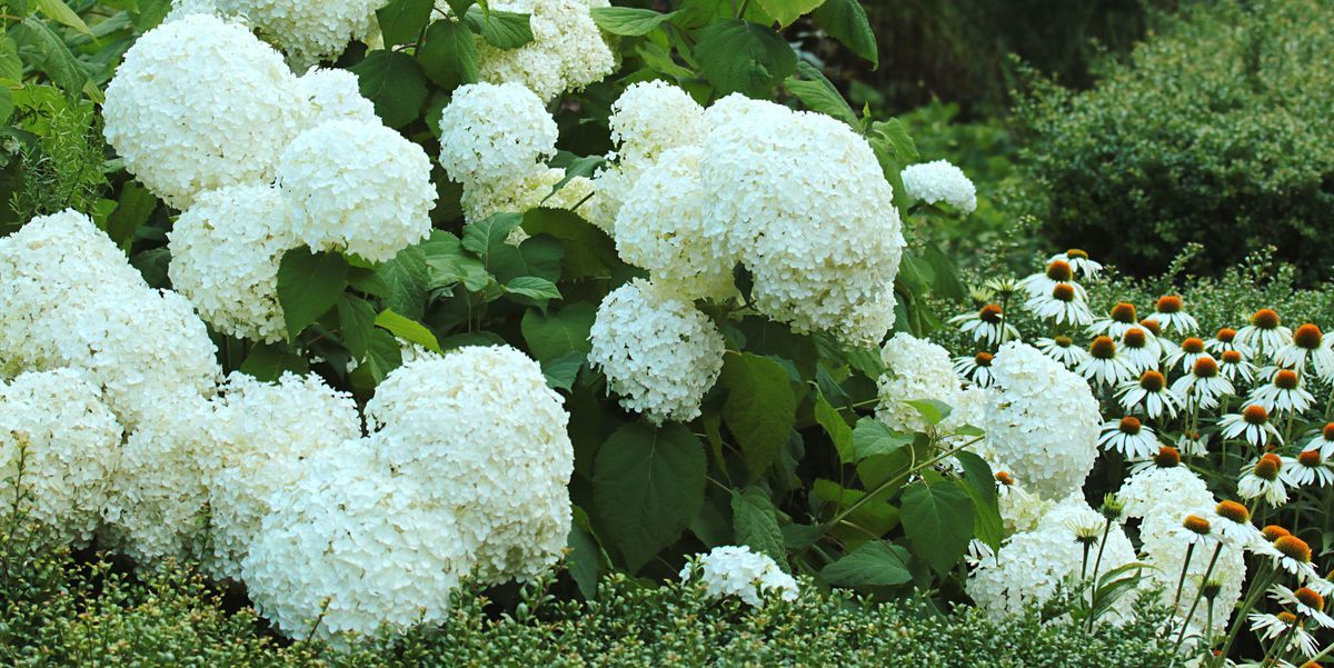 white flower plant outdoor