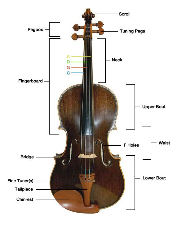 Parts Of The Viola Details And A Diagram Of The Different Parts And Components Of A Viola And An Explanation Of The Purpose And Fun Violin Viola Learn Violin