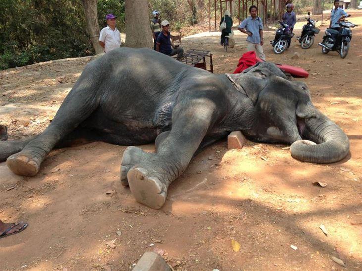En Zalim Tatil Faaliyeti: Kamboçya'da Turist Gezdiren Fil Sıcaktan Öldü - http://www.habergaraj.com/en-zalim-tatil-faaliyeti-kambocyada-turist-gezdiren-fil-sicaktan-oldu-326928.html?utm_source=Pinterest&utm_medium=En+Zalim+Tatil+Faaliyeti%3A+Kambo%C3%A7ya%27da+Turist+Gezdiren+Fil+S%C4%B1caktan+%C3%96ld%C3%BC&utm_campaign=326928