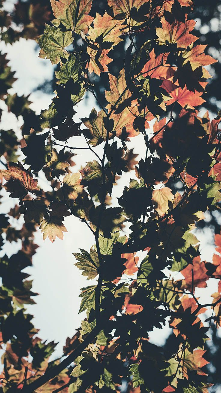 8 Free Autumn Inspired iPhone 7 Plus Wallpapers | Preppy Wallpapers