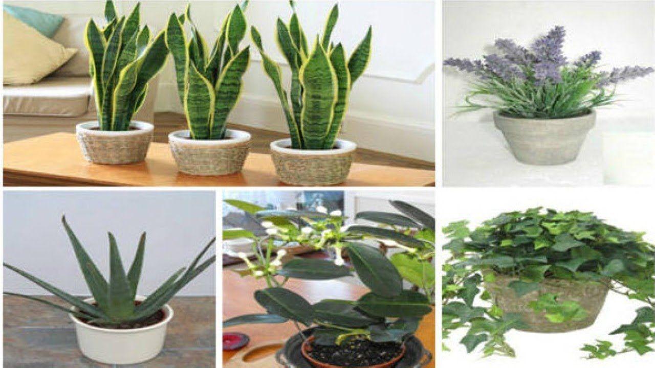 Metti una di queste piante in camera e ecco cosa succede al tuo