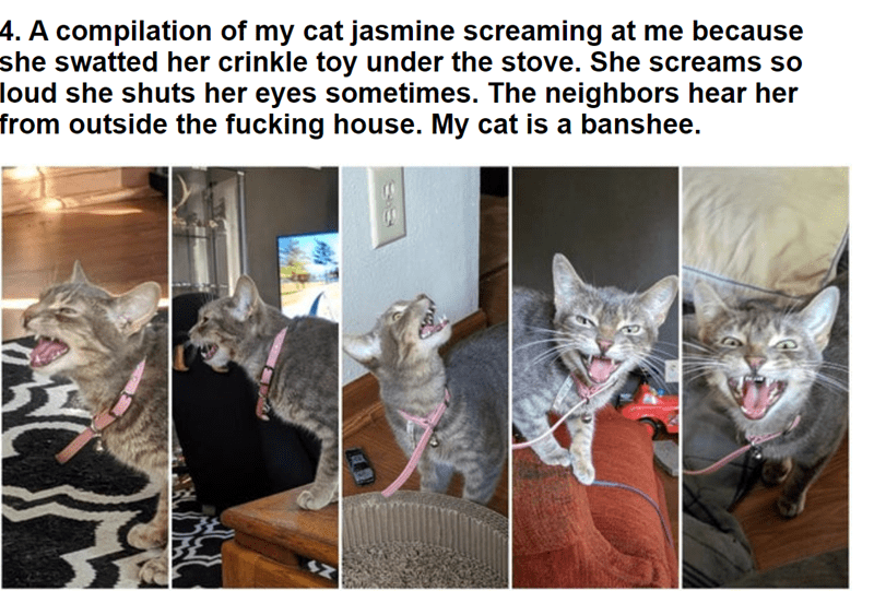 Annoyingly Adorable Cats Doing What They Do Best Yelling At Their Humans In 2020 Cute Cats Cats Cat Memes
