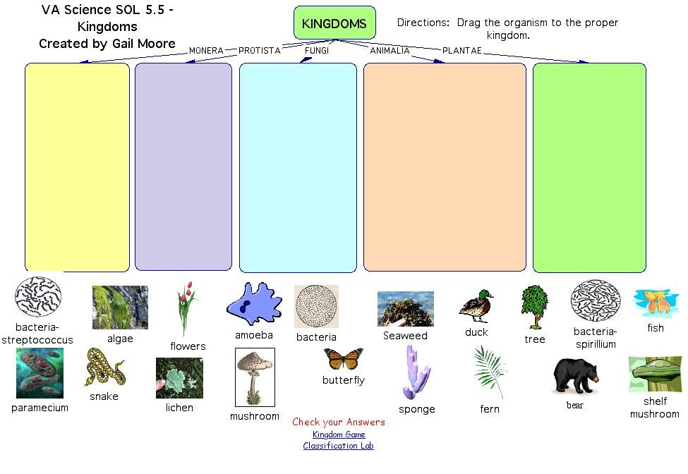 Printable Worksheets five kingdoms of living things worksheets : classifications of animals activity kingdoms - Google Search ...