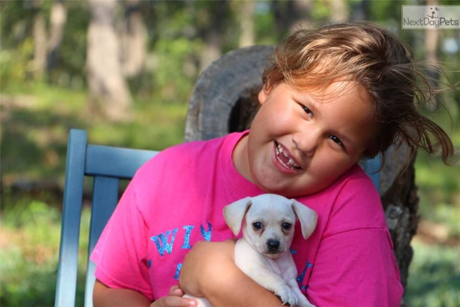 Directory of breeders and shelters with dogs and puppies