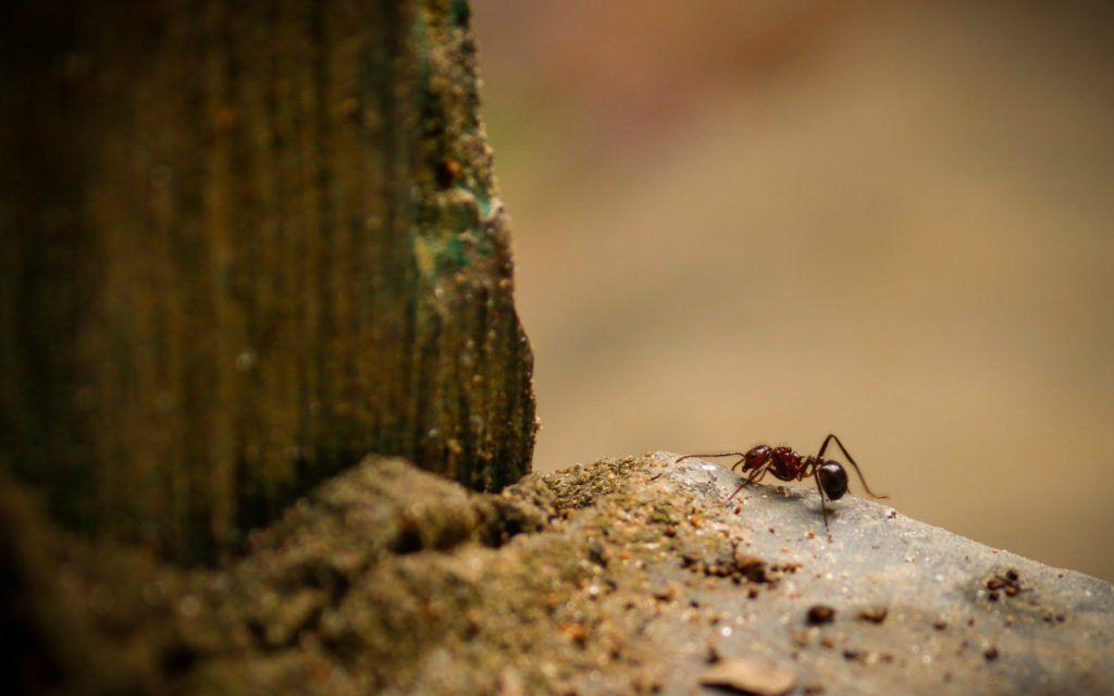 Pin Von Plantura Garten Ideen Tipp Auf Ameisenplage In 2020 Ameisen Im Garten Pflanzenschutz Ameisen