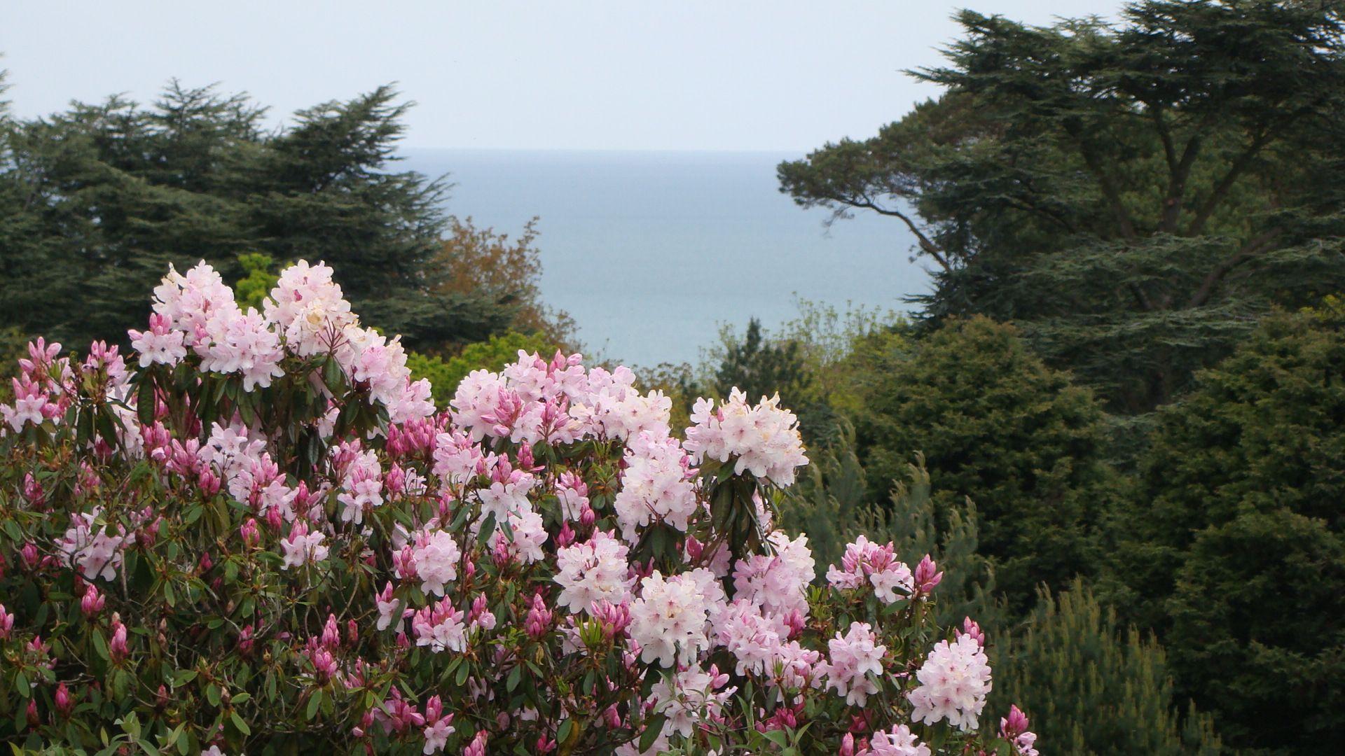 Rhododendron Bois Des Moutiers Varengeville Rhododendron Vita Sackville West Seine Maritime