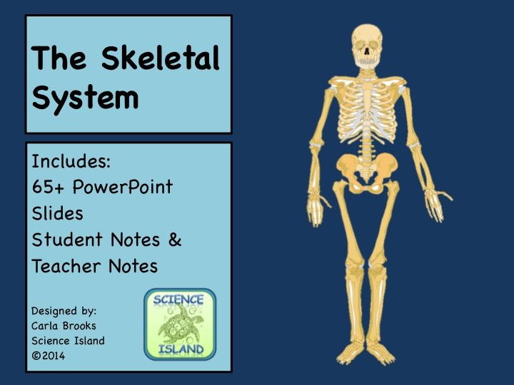 Skeletal System PowerPoint Lesson and Notes - Anatomy & Physiology ...