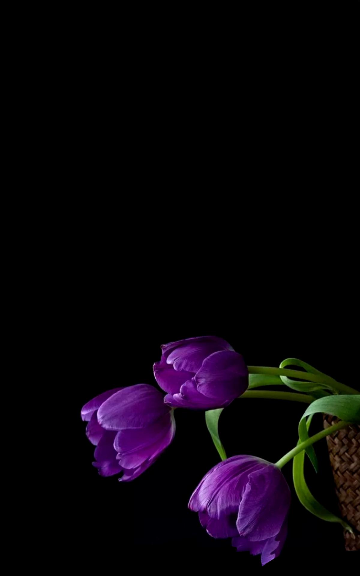 Mennyfox55 Tulipanes Exkisita Naturaleza En 2019