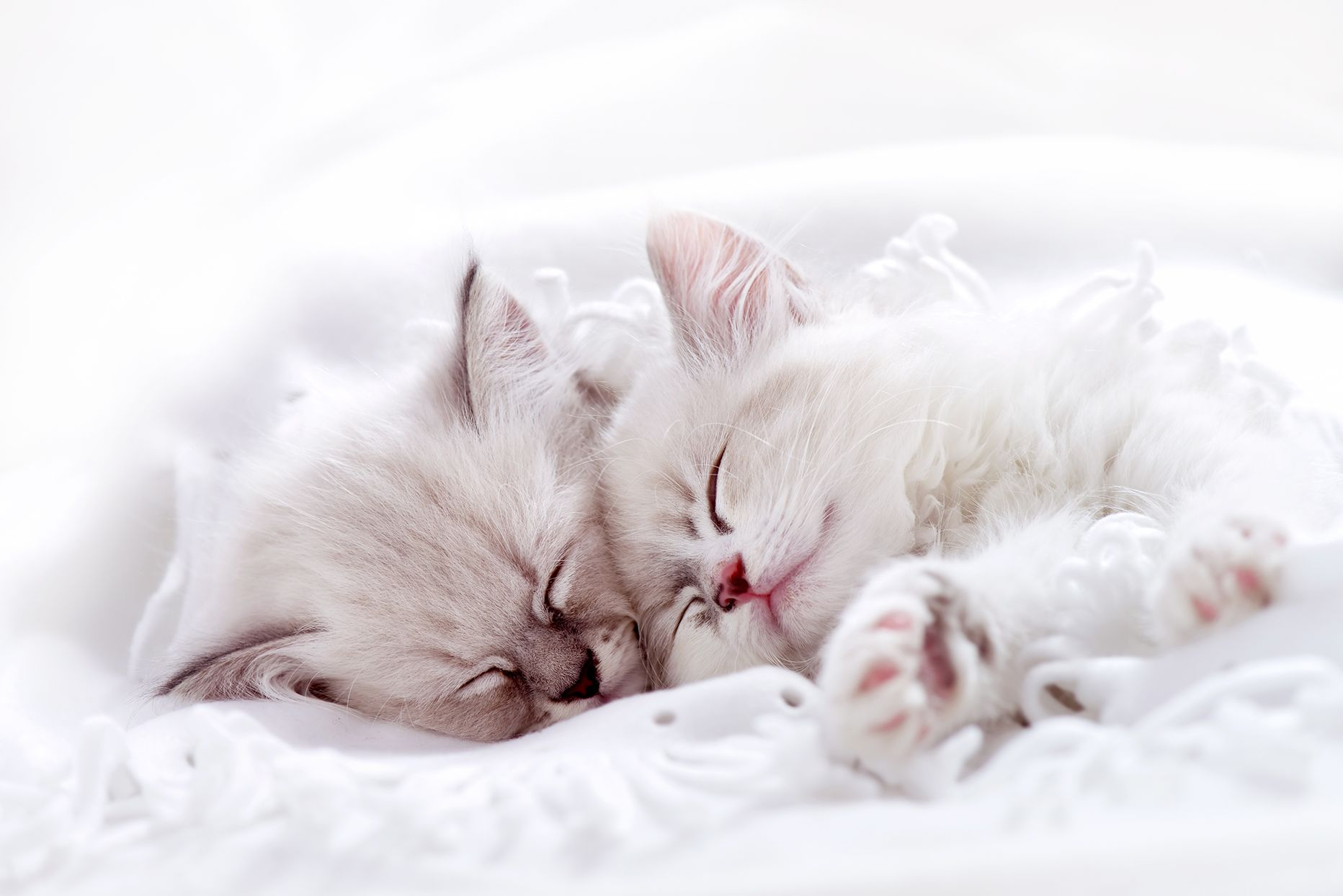 Cats Sleep Two Thirds Of Their Life Away That S Sixteen Hours Or More Each Day Spent In Catnaps Curled In The Sun Atop A Win Dog Pet Beds Cats Sleeping Kitten