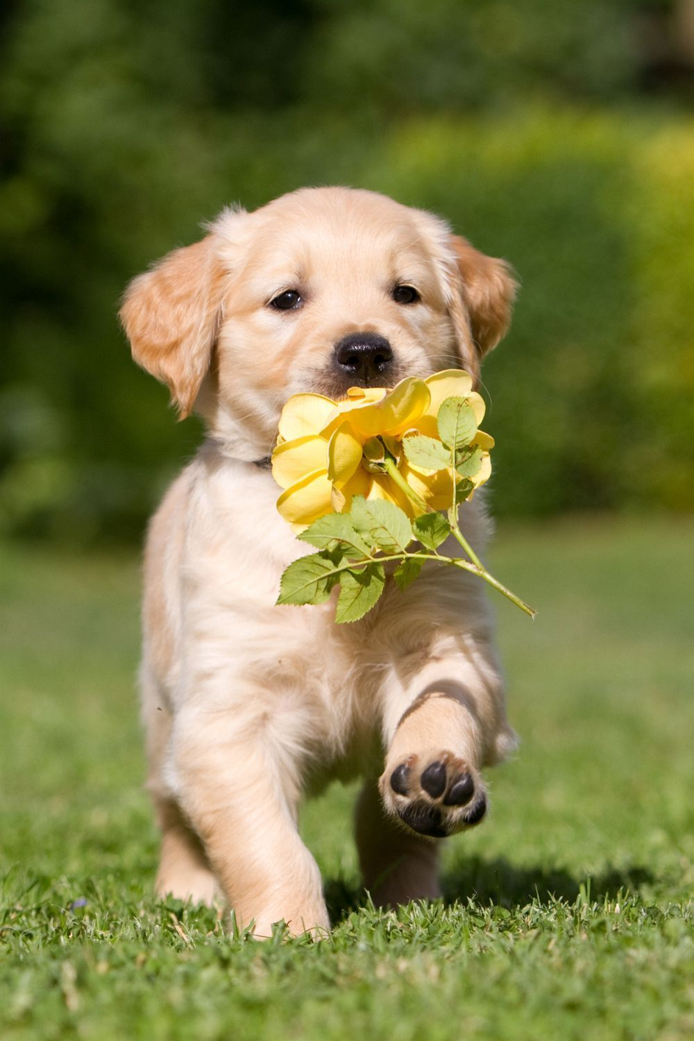 Flowers For My Mommy D 3 3 3 3 Adorable Dogs Cute