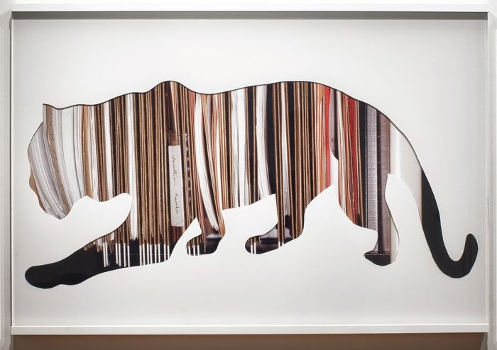 Abby Goodman  White Tiger  30 x 45  (2012) Enamel paint on 1/2 plexiglas on top of large format photograph mounted on aluminum
