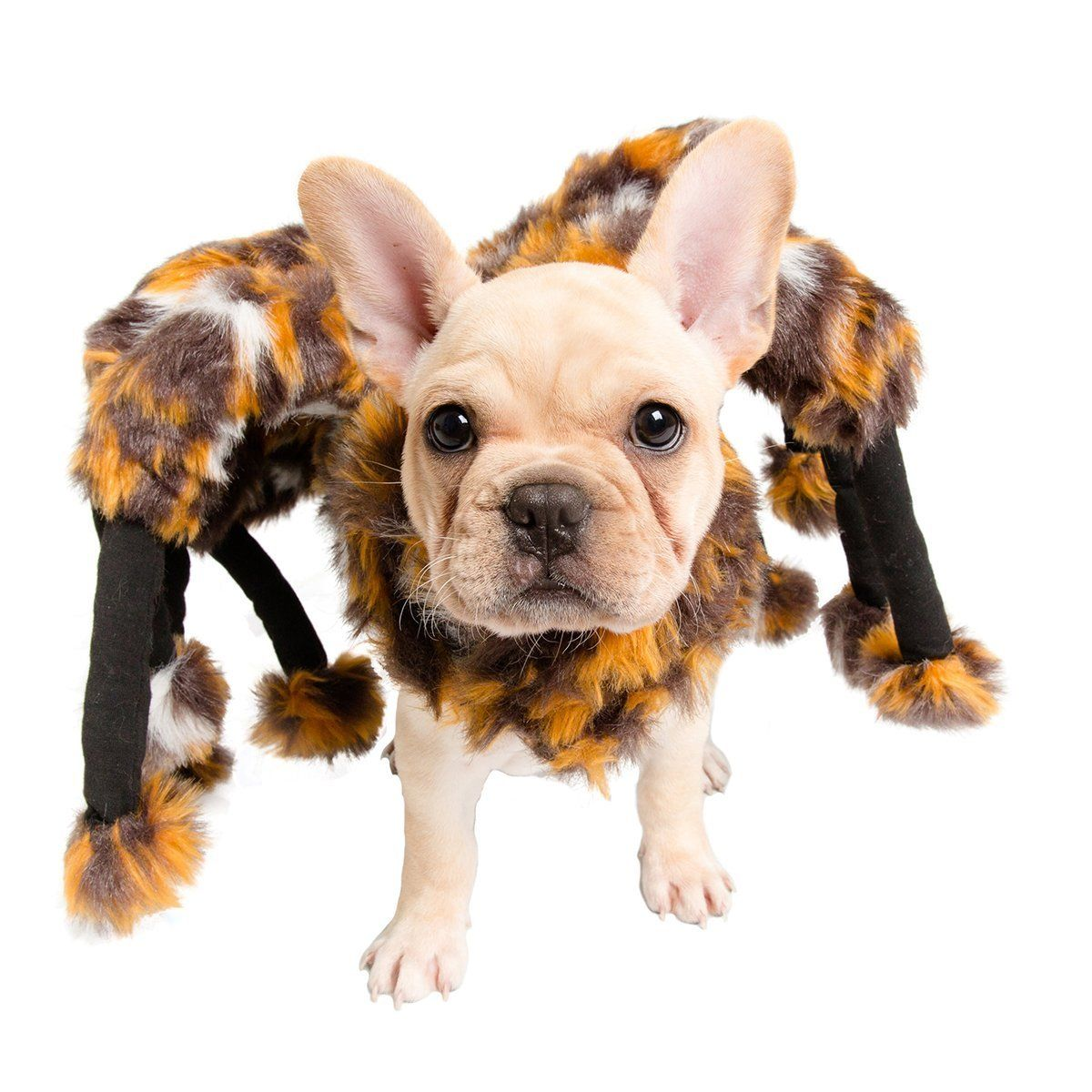Scary Spider Dog Costume Dog Spider Costume Pet Costumes