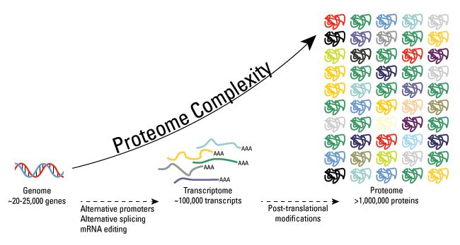 Proteome Complexity Figure 650px Biology Resources Regulation