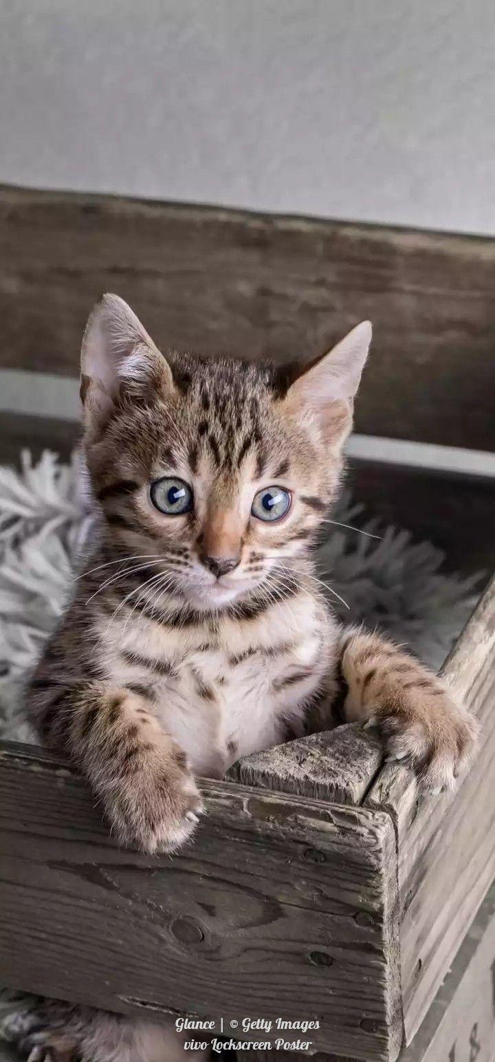 Pin By Alamgir Khan On A Khan In 2020 Kittens Cutest Cats Pretty Cats