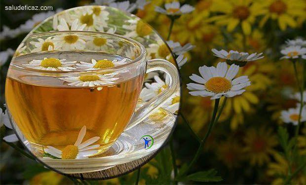 Durante siglos la gente bebio una infusión muy conocida por sus propiedades y delicioso sabor. Te de manzanilla para que sirve y sus beneficios.