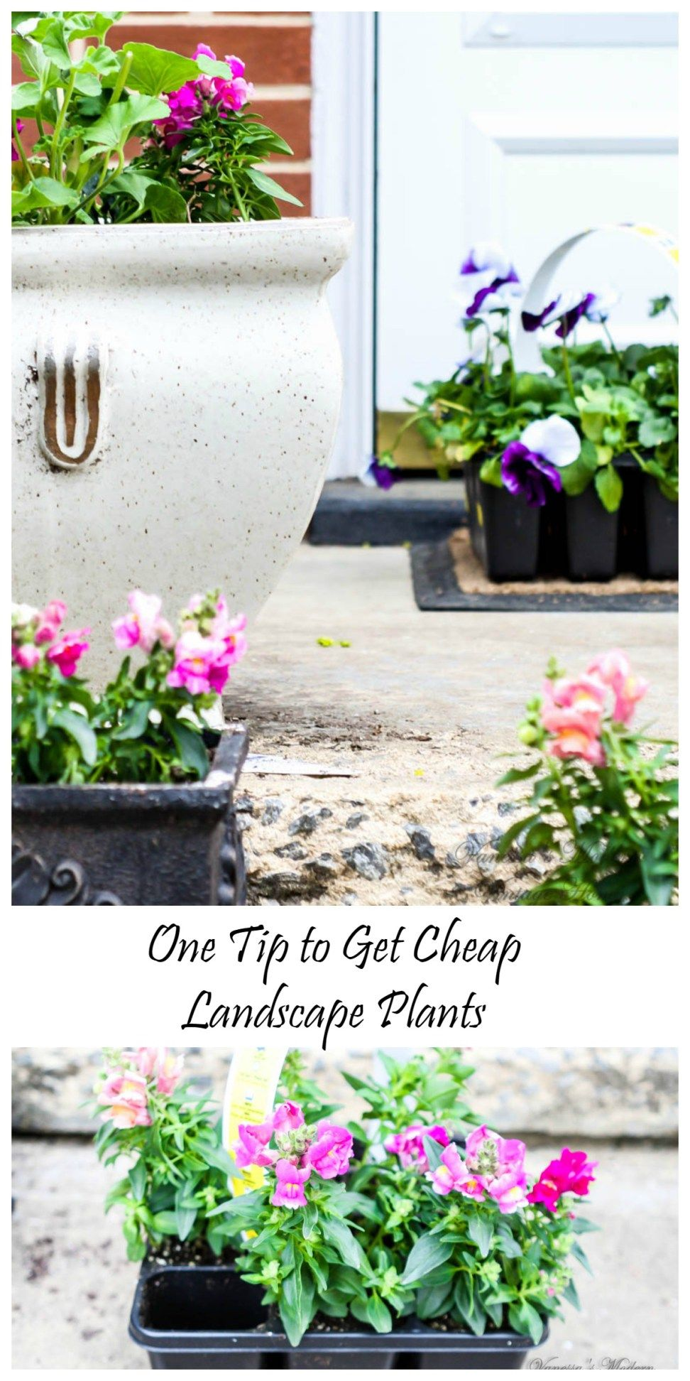 One trick to getting cheap landscape plants | Cheap plants ...