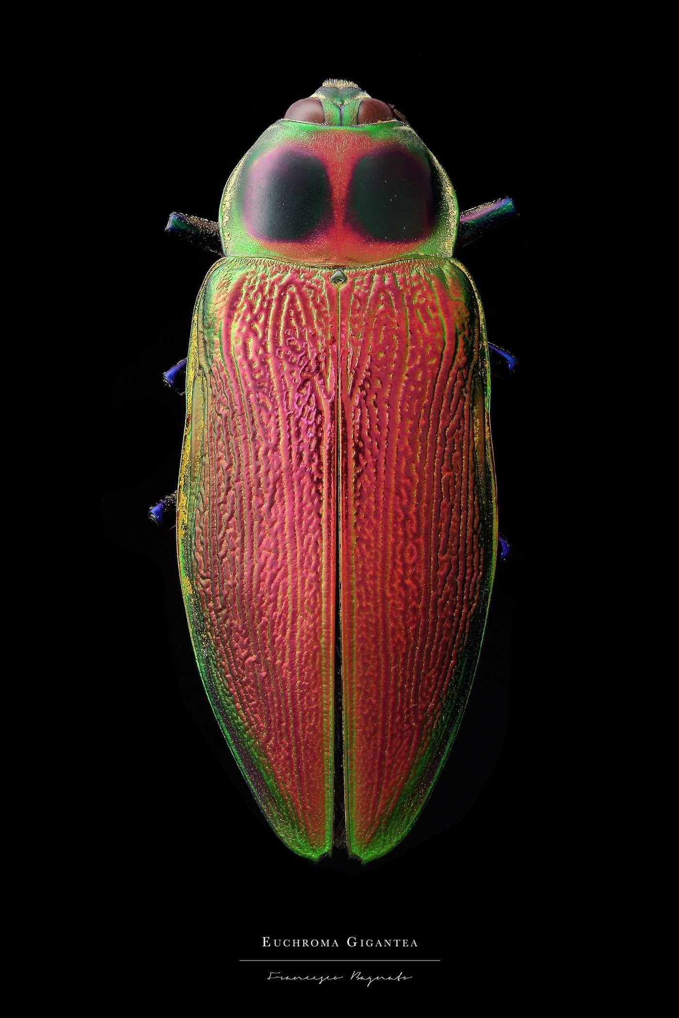 Entomology: Macro Portraits of Insects by Francesco Bagnato #inspiration #photography