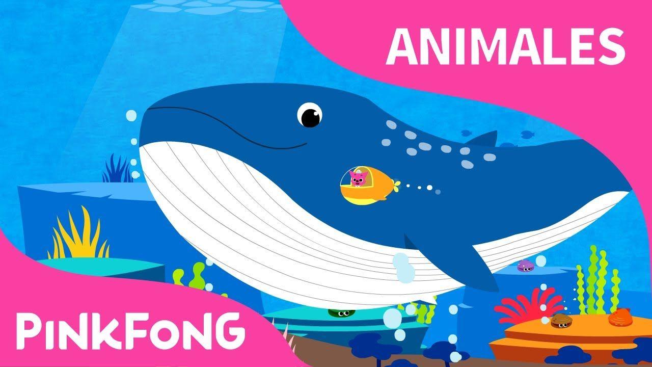 Chas, Ballena Azul | Ballena Azul | Animales | PINKFONG Canciones ...