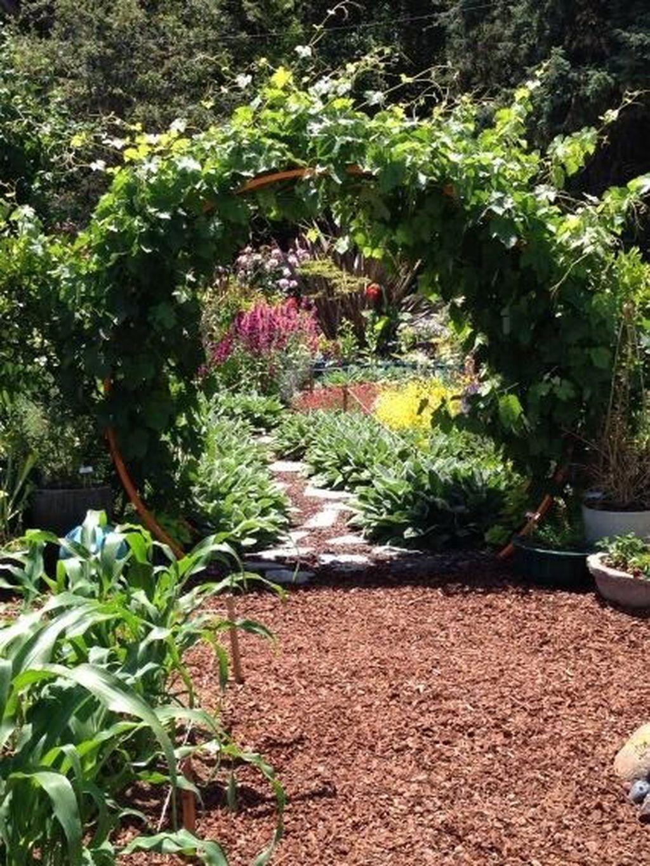 40 Inspiring Grape Vine Ideas To Beautify Your Garden Lush