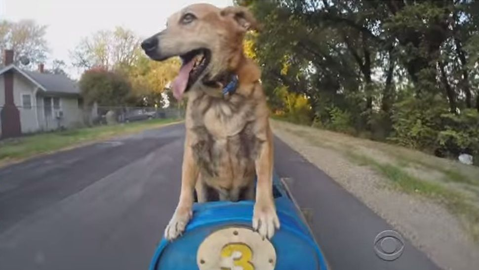 The Real Story Behind That Crazy Texas Dog Train Dog Training