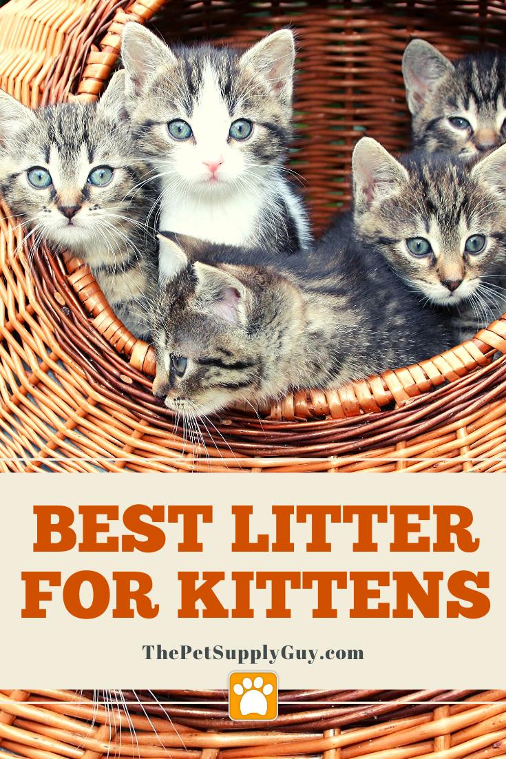 Best Litter For Training Kittens Best Litter For Kittens Litter Training Kittens