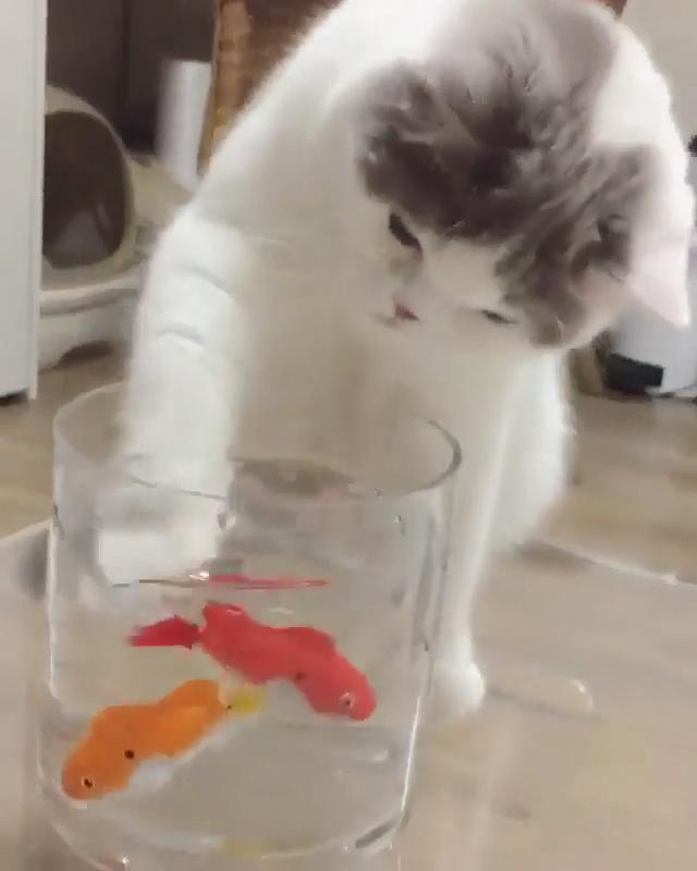 Train Kitten, Kitty Funny, - Pet Food Free Samples, Kitty Cat Birthday.