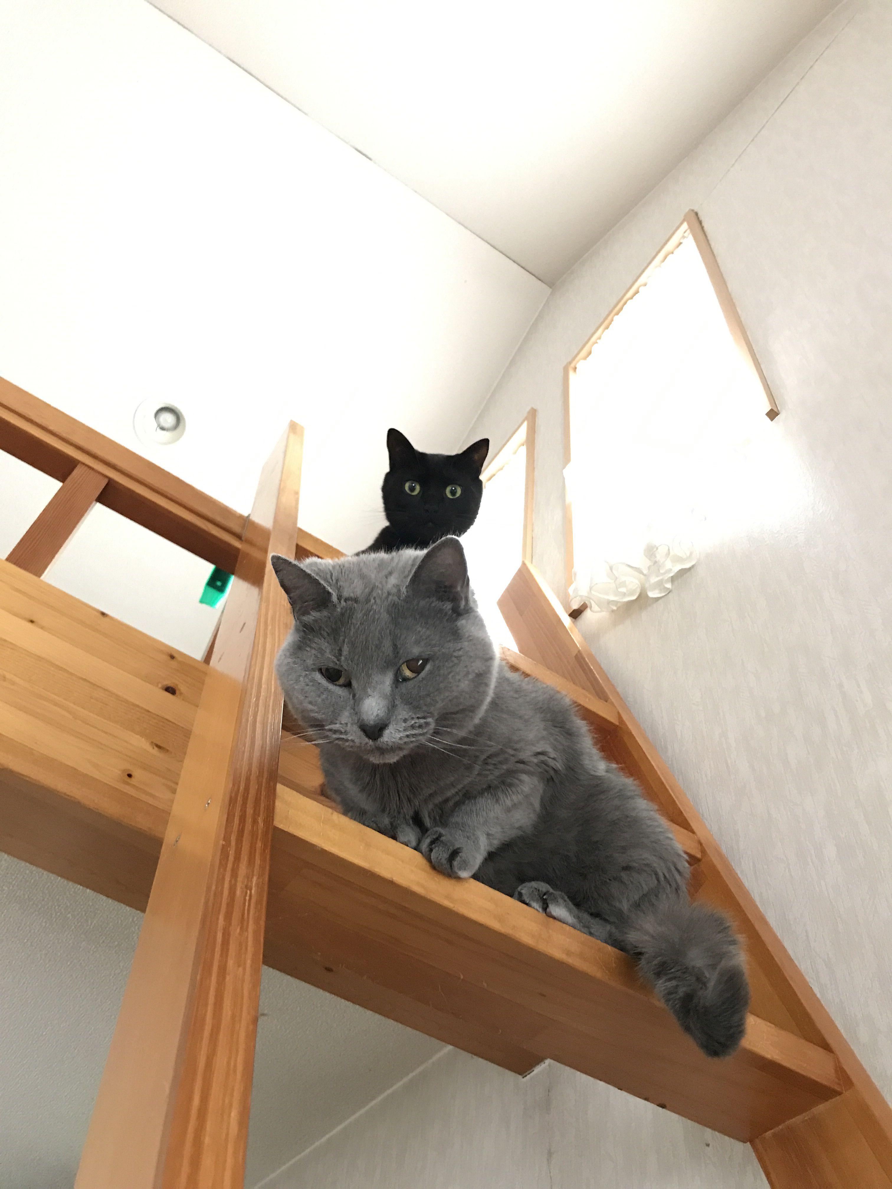 家の黒とグレイの猫達 シャルトリュー 猫 お墓