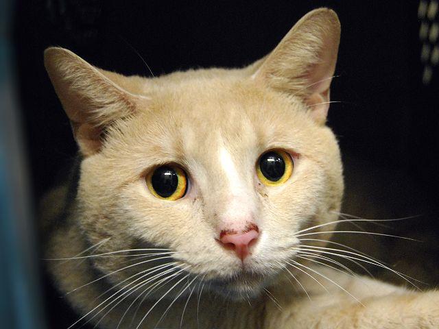 Yellow A1091156 Foster Cat Cat Adoption Cat Parenting