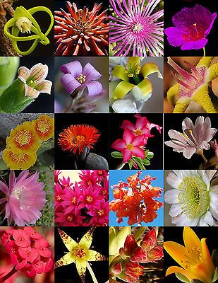 rare plant exotic caudex desert COLLECTION succulents  30 seeds SUCCULENT MIX