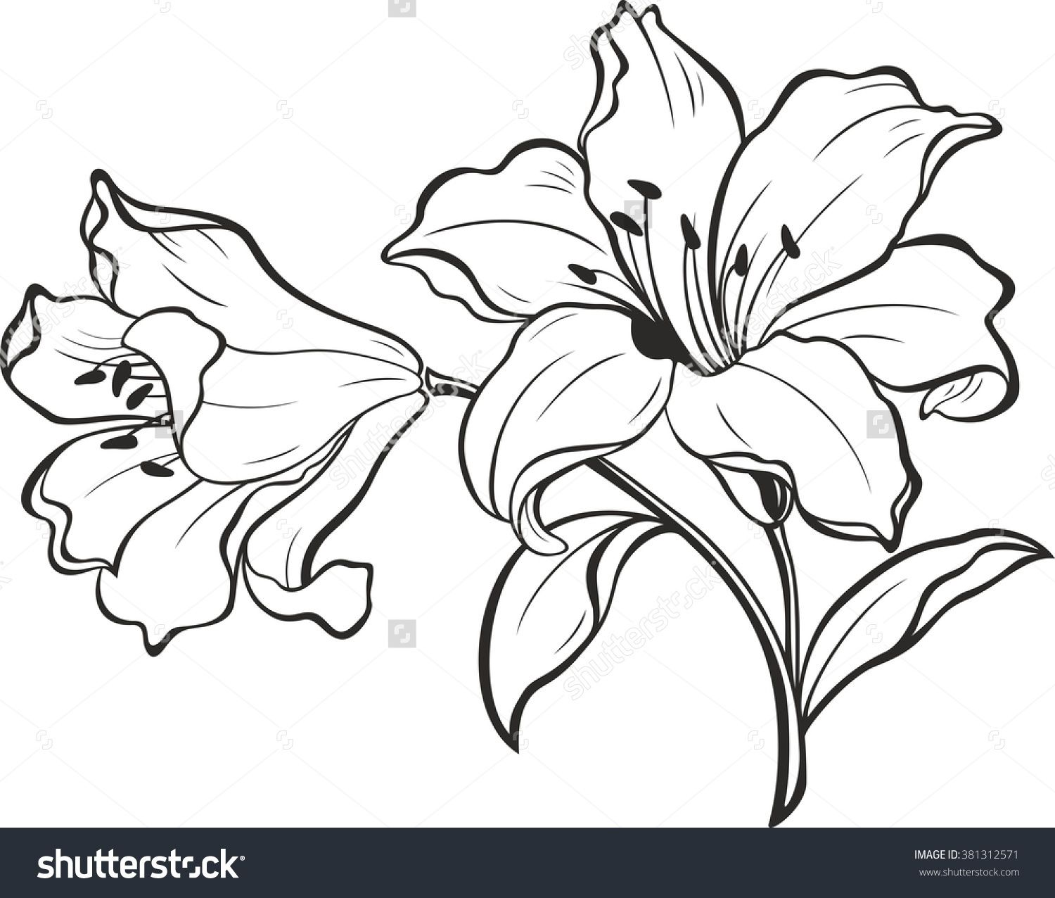 Lily Flowers. Blooming Lily. Card Or Floral Background