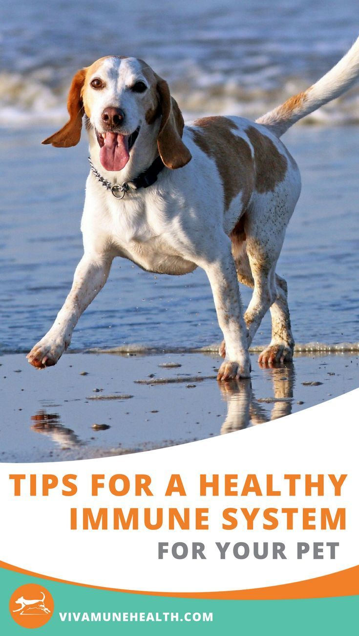 Looking for Natural Dog Immune System Boosters? Dog