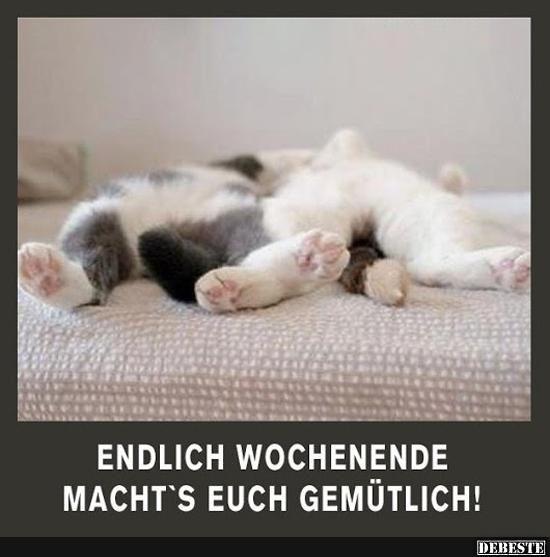 Endlich Wochenende Macht S Euch Gemutlich Lustige Bilder Spruche Witze Echt Lustig Lustige Bilder Whatsapp Grusse Wochenende Lustige Katzen