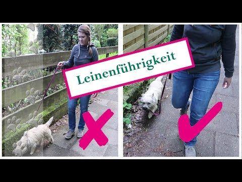 YouTube Leinenführigkeit, Hunde erziehen, Welpen erziehen