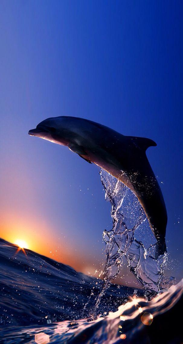 Delfino Tramonto мандри по морях та океанах Delfini Animali
