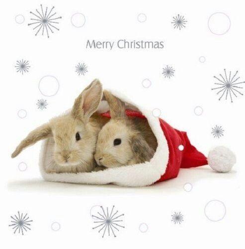 Merry Christmas Bunnies Bunny Wallpaper Christmas Bunny Cute Baby Bunnies